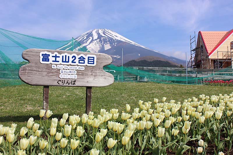 GW中が見頃!富士山とチューリップの景色が楽しめる[ぐりんぱ]のチューリップまつり