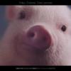 メンソレータムADボタニカルCM豚と共演する女の子は誰?カサかゆい乾燥肌にはメンソレータム