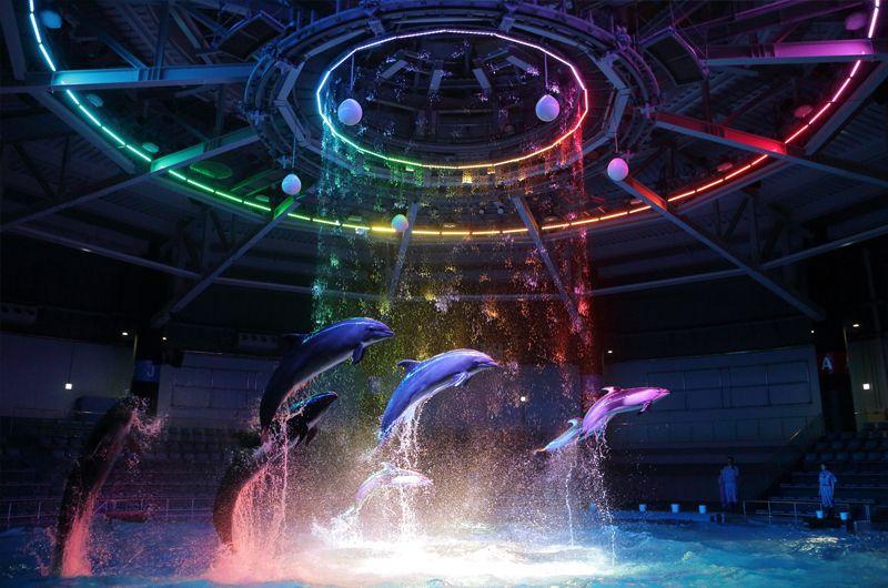 """イルミデートは""""エプソンアクアパーク品川""""スノーアクアリウム!プロジェクションマッピングと海の銀世界"""