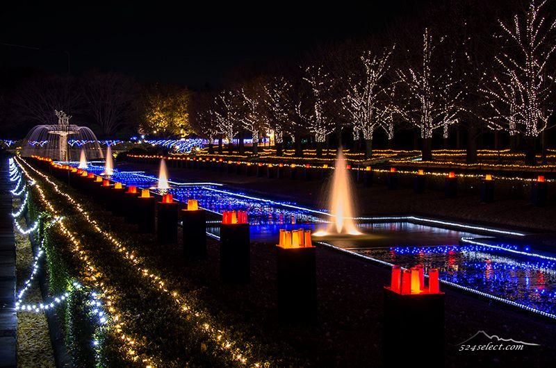 昭和記念公園イルミネーション2015東京イルミデートならここ!お勧めの時間帯にゆっくり楽もう