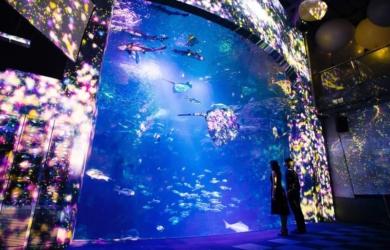 2015新江ノ島水族館幻想的なクリスマスイベントが始まる!プロジェクションで華やかなアート空間