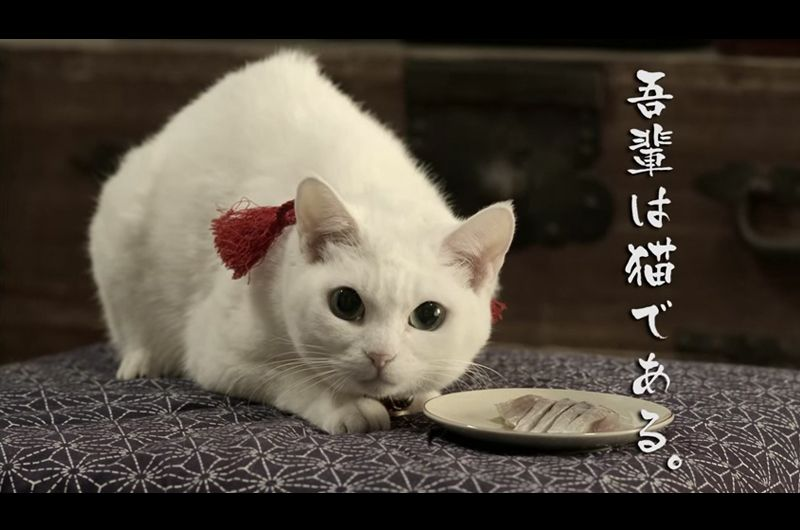 女優猫あなごさんの猫侍再び「猫侍玉之丞江戸へ行く」放送!明かされる玉之丞のルーツとは?