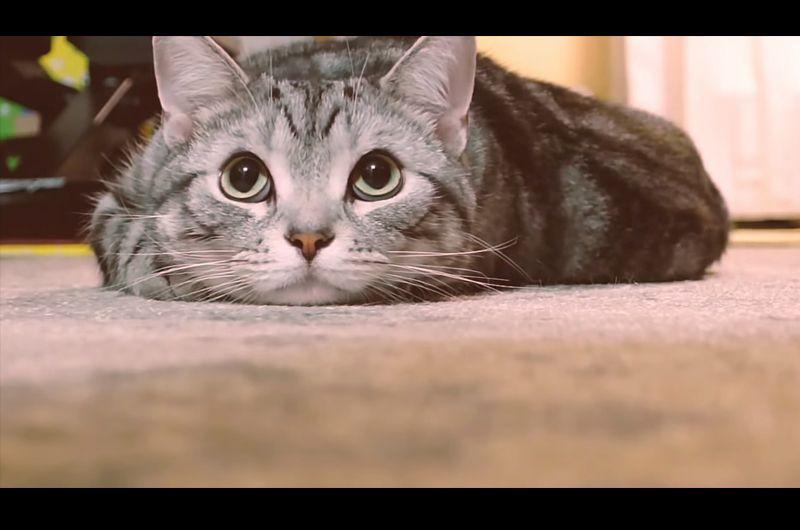 猫にお知らせを!ドライバーならやってほしい発信前の儀式!広がるNISSANプロジェクト #猫バンバン
