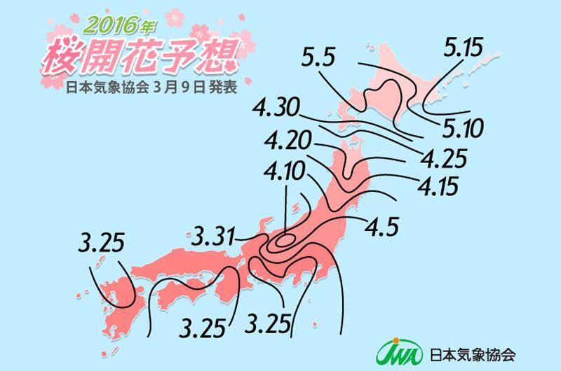 2016年東京関東圏桜の見頃はいつ頃?しだれ桜や夜桜を!開花予想で満開の花見を楽しもう